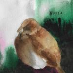 bevs sparrow 1